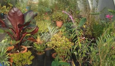 plants_winter_store