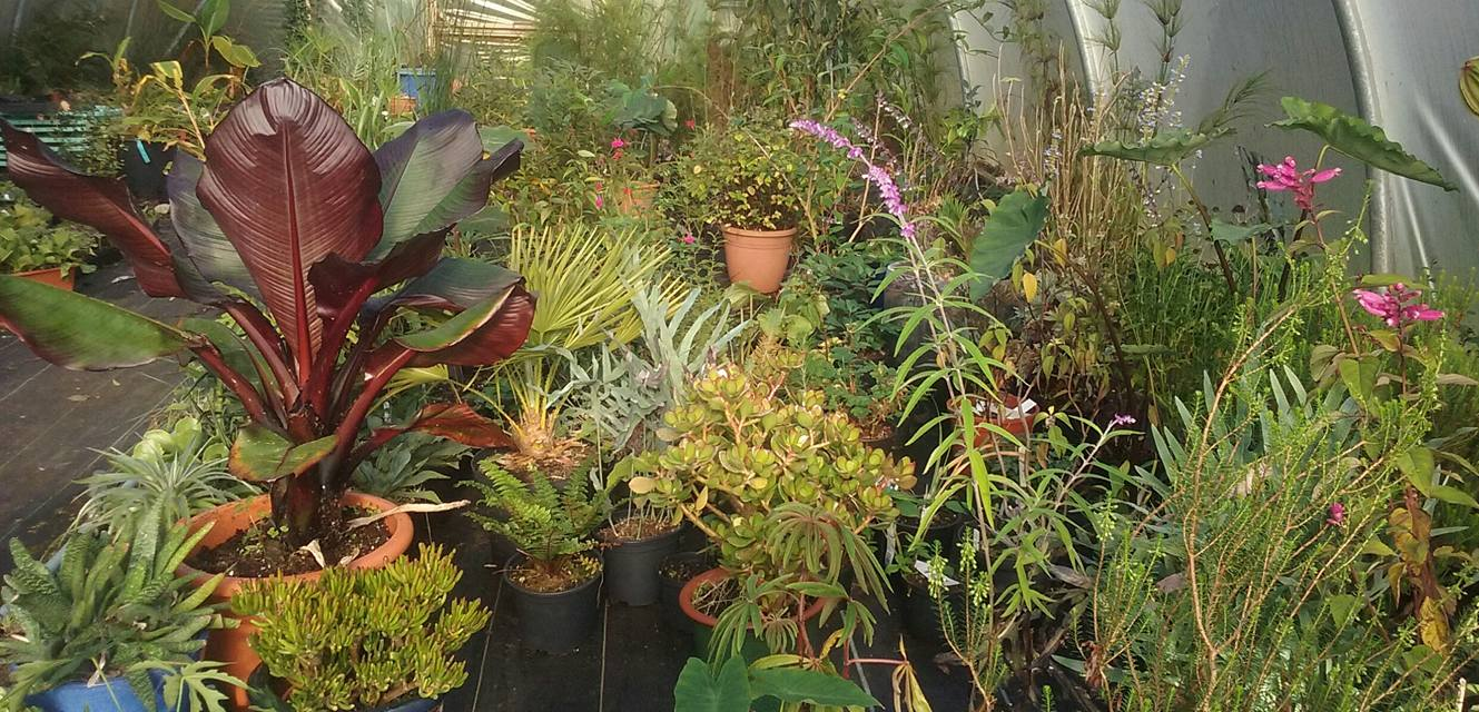 plants_winter_store